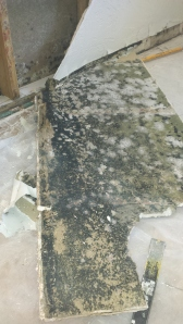 Drywall Mold